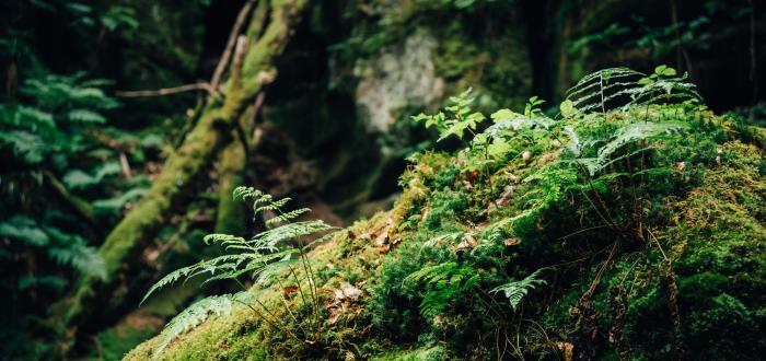 Plädoyer für naturgerechte Waldnutzung Urheber: Michael (c)Fotolia_134702403_M